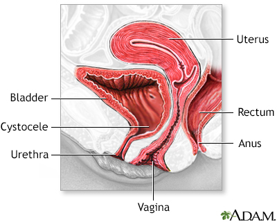 Normal Size of Vaginal Opening http://baptisteast.adam.com/content.aspx?productId=13&pid=13&gid=100110