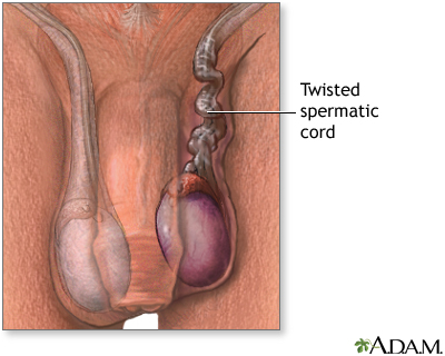 IndicationsNormal Testis Size Men